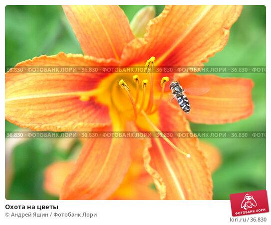 Охота на цветы, фото № 36830, снято 16 июля 2005 г. (c) Андрей Яшин / Фотобанк Лори