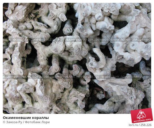 Окаменевшие кораллы, фото № 258226, снято 12 апреля 2008 г. (c) Заноза-Ру / Фотобанк Лори
