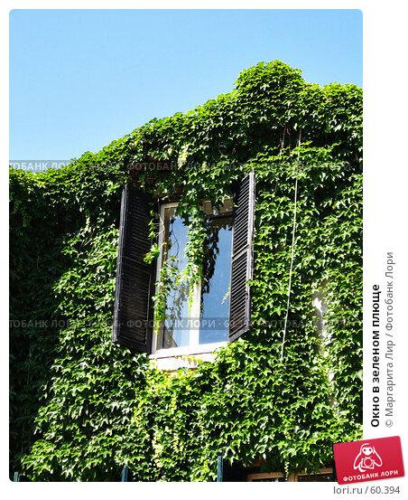 Окно в зеленом плюще, фото № 60394, снято 24 мая 2017 г. (c) Маргарита Лир / Фотобанк Лори