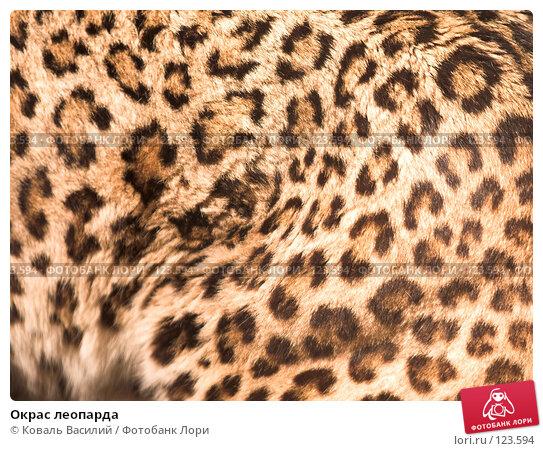Окрас леопарда, фото № 123594, снято 20 апреля 2007 г. (c) Коваль Василий / Фотобанк Лори