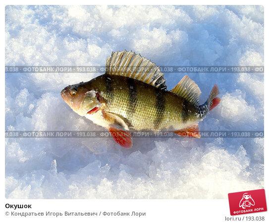 Окушок, фото № 193038, снято 30 января 2008 г. (c) Кондратьев Игорь Витальевич / Фотобанк Лори