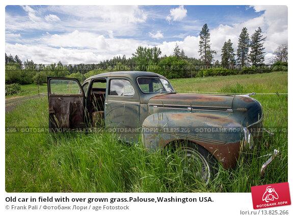 Купить «Old car in field with over grown grass.Palouse,Washington USA.», фото № 13825266, снято 26 апреля 2019 г. (c) age Fotostock / Фотобанк Лори