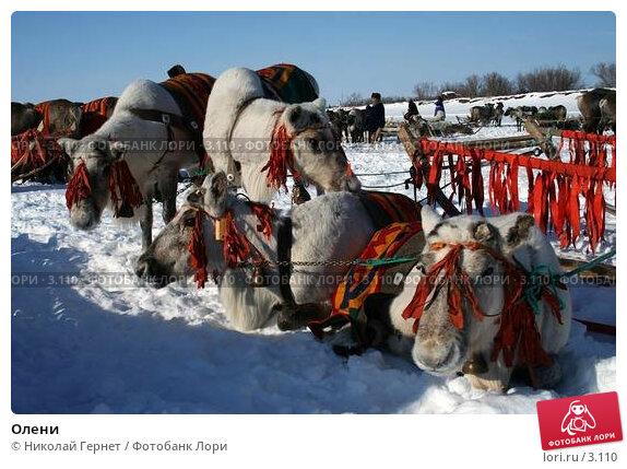 Купить «Олени», фото № 3110, снято 25 марта 2006 г. (c) Николай Гернет / Фотобанк Лори