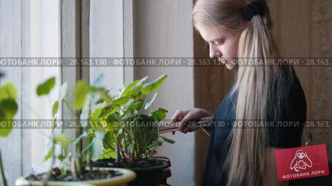 Купить «One young girl watering flowers at home», видеоролик № 28163130, снято 16 ноября 2018 г. (c) Константин Шишкин / Фотобанк Лори