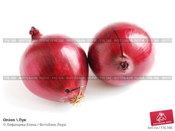 Onion \ Лук, фото № 116166, снято 13 ноября 2007 г. (c) Лифанцева Елена / Фотобанк Лори