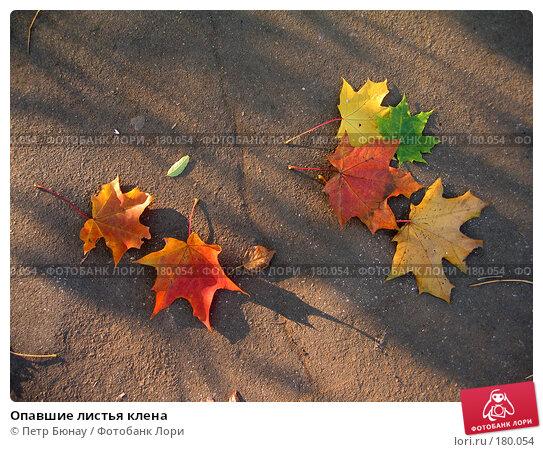 Купить «Опавшие листья клена», фото № 180054, снято 16 октября 2004 г. (c) Петр Бюнау / Фотобанк Лори