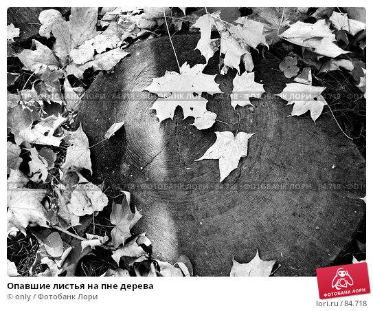 Опавшие листья на пне дерева, фото № 84718, снято 28 марта 2017 г. (c) only / Фотобанк Лори