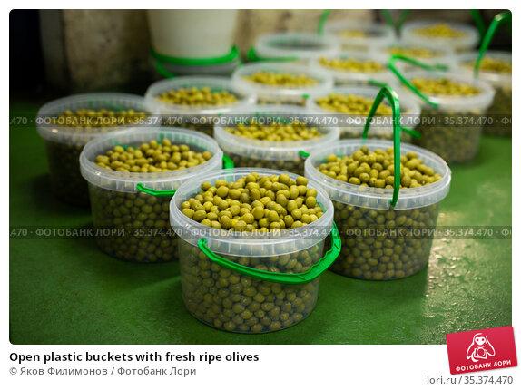 Open plastic buckets with fresh ripe olives. Стоковое фото, фотограф Яков Филимонов / Фотобанк Лори