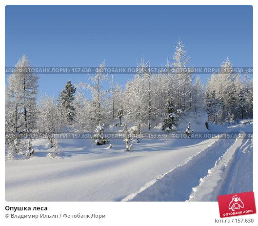 Опушка леса, фото № 157630, снято 23 декабря 2007 г. (c) Владимир Ильин / Фотобанк Лори