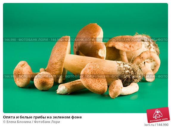 Опята и белые грибы на зеленом фоне, фото № 144990, снято 29 сентября 2007 г. (c) Елена Блохина / Фотобанк Лори