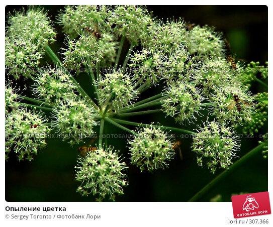 Опыление цветка, фото № 307366, снято 28 июля 2004 г. (c) Sergey Toronto / Фотобанк Лори