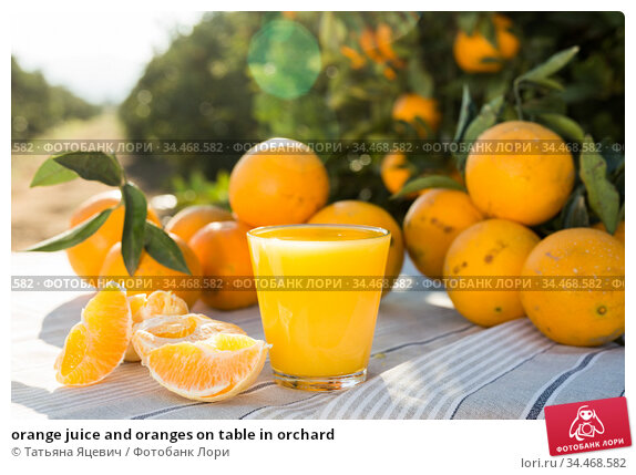 orange juice and oranges on table in orchard. Стоковое фото, фотограф Татьяна Яцевич / Фотобанк Лори
