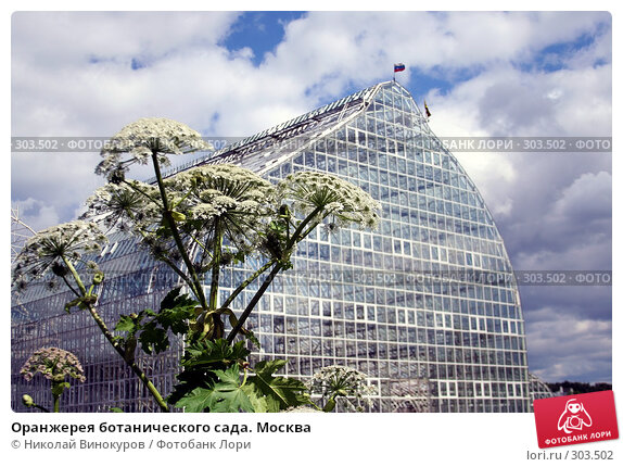 Оранжерея ботанического сада. Москва, эксклюзивное фото № 303502, снято 30 мая 2017 г. (c) Николай Винокуров / Фотобанк Лори