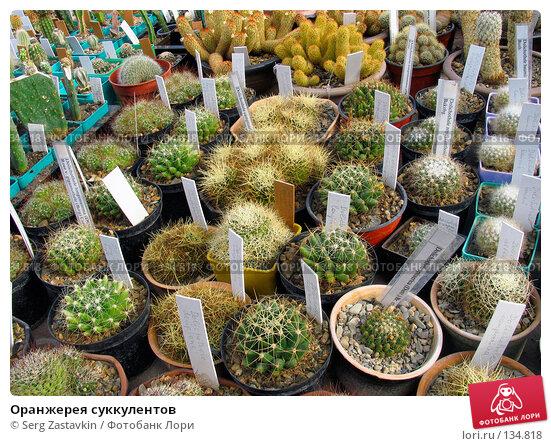 Купить «Оранжерея суккулентов», фото № 134818, снято 3 марта 2005 г. (c) Serg Zastavkin / Фотобанк Лори