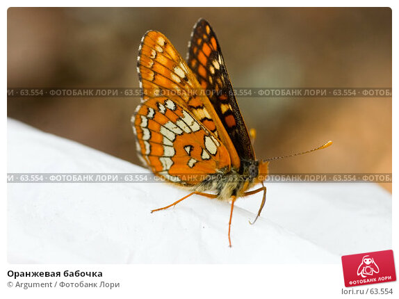 Оранжевая бабочка, фото № 63554, снято 21 июня 2006 г. (c) Argument / Фотобанк Лори