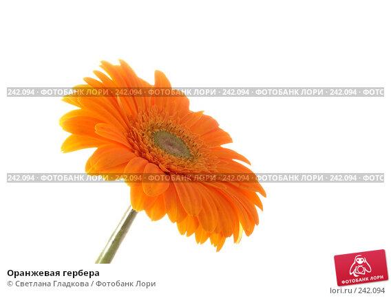 Купить «Оранжевая гербера», фото № 242094, снято 23 апреля 2018 г. (c) Cветлана Гладкова / Фотобанк Лори