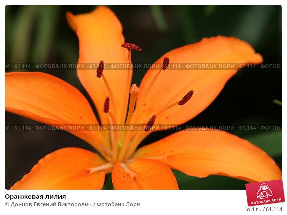 Оранжевая лилия, фото № 61114, снято 10 июля 2007 г. (c) Донцов Евгений Викторович / Фотобанк Лори