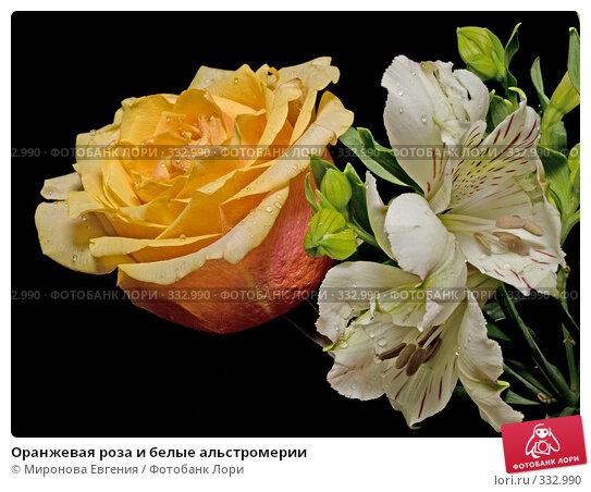 Купить «Оранжевая роза и белые альстромерии», фото № 332990, снято 24 июня 2008 г. (c) Миронова Евгения / Фотобанк Лори