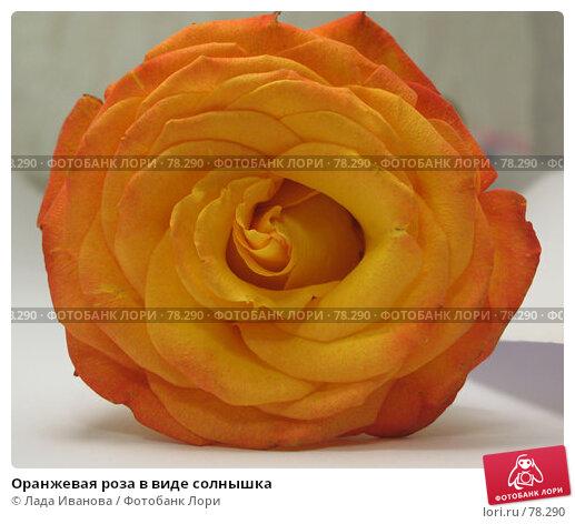 Оранжевая роза в виде солнышка, фото № 78290, снято 1 сентября 2007 г. (c) Лада Иванова / Фотобанк Лори