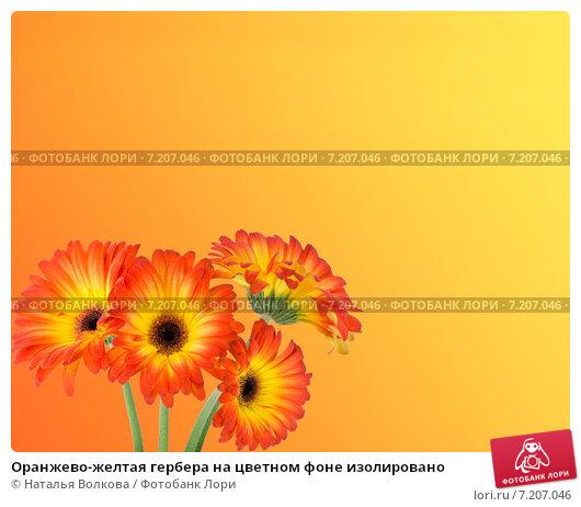 Купить «Оранжево-желтая гербера на цветном фоне изолировано», фото № 7207046, снято 26 марта 2015 г. (c) Наталья Волкова / Фотобанк Лори