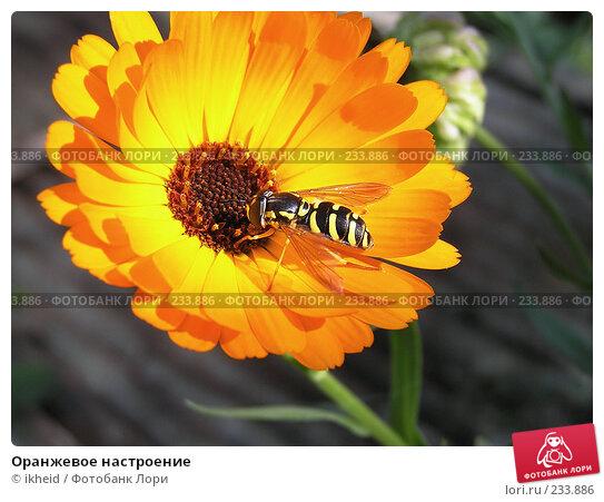 Купить «Оранжевое настроение», фото № 233886, снято 22 сентября 2007 г. (c) ikheid / Фотобанк Лори