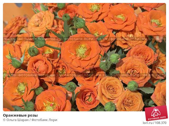 Оранжевые розы, фото № 108370, снято 25 августа 2007 г. (c) Ольга Шаран / Фотобанк Лори