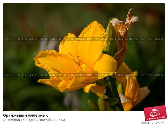 Оранжевый лилейник, фото № 176150, снято 24 июля 2007 г. (c) Петухов Геннадий / Фотобанк Лори