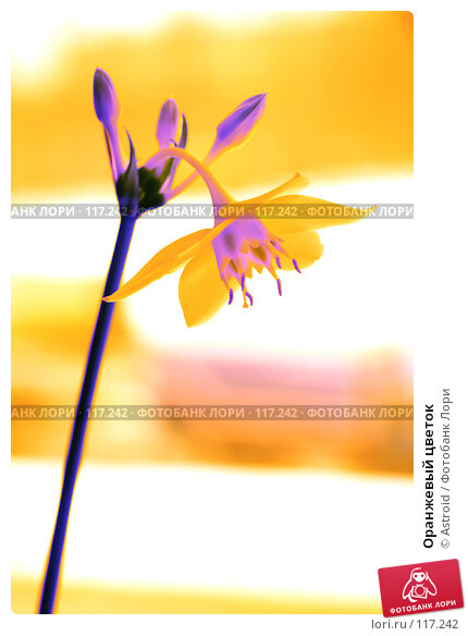 Оранжевый цветок, фото № 117242, снято 14 ноября 2007 г. (c) Astroid / Фотобанк Лори