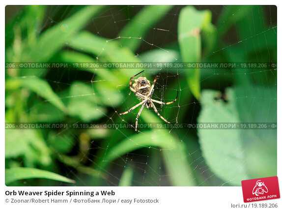 Spider spinning web