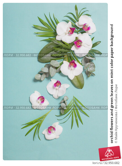 orchid flowers and green leaves on mint color paper background. Стоковое фото, фотограф Майя Крученкова / Фотобанк Лори