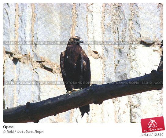 Орел, фото № 12310, снято 24 сентября 2006 г. (c) Roki / Фотобанк Лори