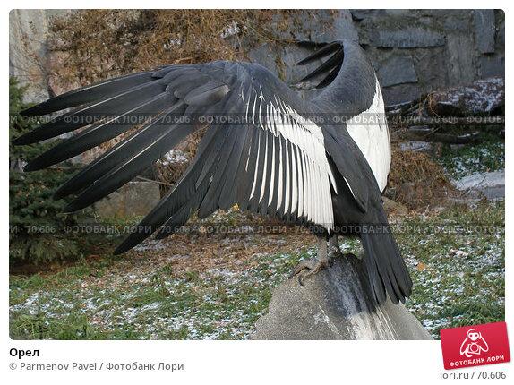 Орел, фото № 70606, снято 5 ноября 2006 г. (c) Parmenov Pavel / Фотобанк Лори
