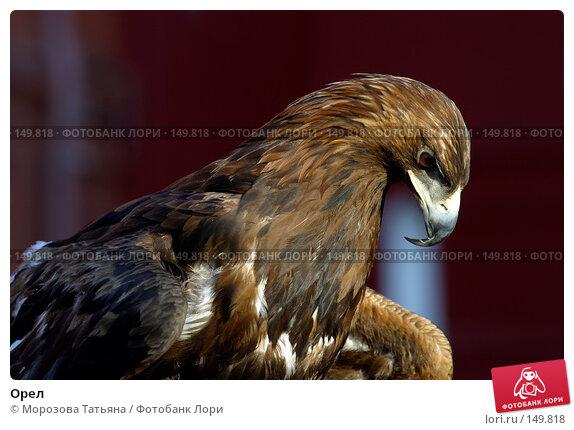 Орел, фото № 149818, снято 5 апреля 2006 г. (c) Морозова Татьяна / Фотобанк Лори