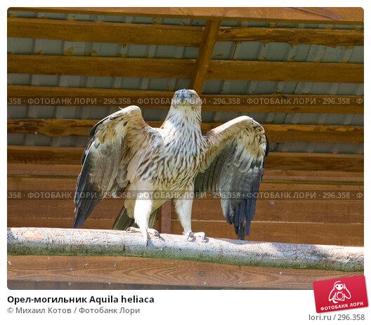 Орел-могильник Aquila heliaca, фото № 296358, снято 13 мая 2008 г. (c) Михаил Котов / Фотобанк Лори