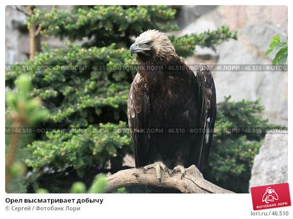 Орел высматривает добычу, фото № 46510, снято 22 мая 2007 г. (c) Сергей / Фотобанк Лори
