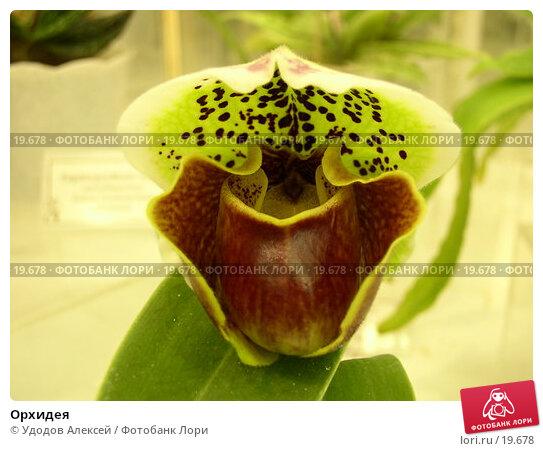 Орхидея, фото № 19678, снято 15 февраля 2007 г. (c) Удодов Алексей / Фотобанк Лори