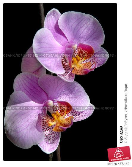 Орхидея, фото № 57142, снято 2 июля 2007 г. (c) Андрей Лабутин / Фотобанк Лори