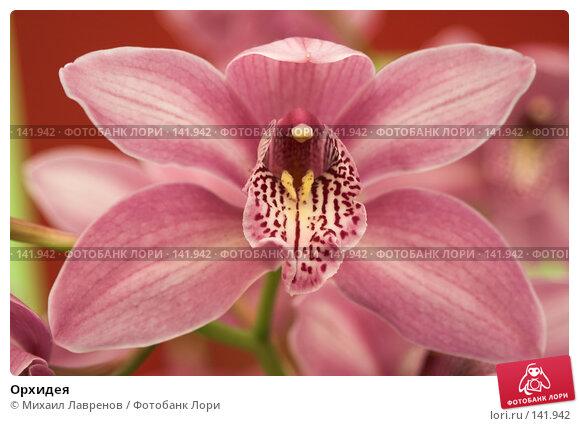 Орхидея, фото № 141942, снято 23 апреля 2006 г. (c) Михаил Лавренов / Фотобанк Лори