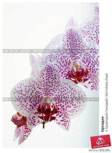 Орхидея, фото № 259926, снято 28 мая 2017 г. (c) Кравецкий Геннадий / Фотобанк Лори