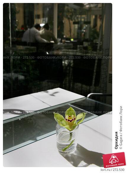 Орхидея, фото № 272530, снято 8 марта 2008 г. (c) Gagara / Фотобанк Лори