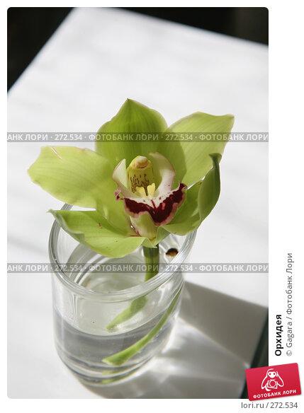 Орхидея, фото № 272534, снято 8 марта 2008 г. (c) Gagara / Фотобанк Лори