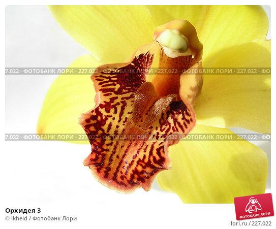 Орхидея 3, фото № 227022, снято 11 марта 2008 г. (c) ikheid / Фотобанк Лори
