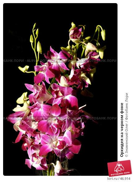 Орхидея на черном фоне, эксклюзивное фото № 46914, снято 28 января 2007 г. (c) Знаменский Олег / Фотобанк Лори
