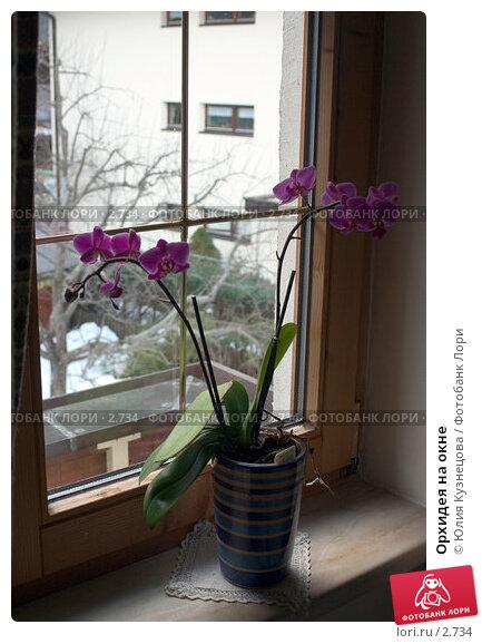 Орхидея на окне, фото № 2734, снято 28 октября 2016 г. (c) Юлия Кузнецова / Фотобанк Лори