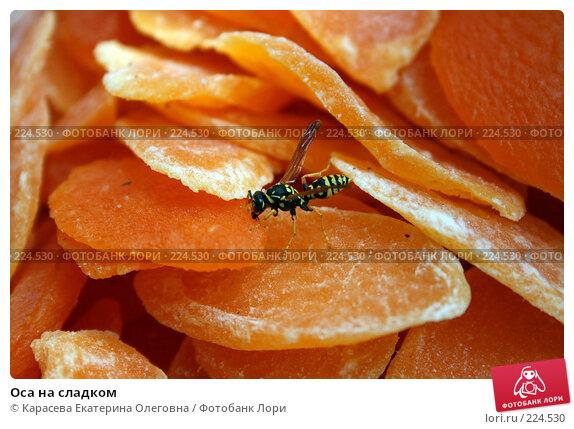 Оса на сладком, фото № 224530, снято 26 июля 2007 г. (c) Карасева Екатерина Олеговна / Фотобанк Лори