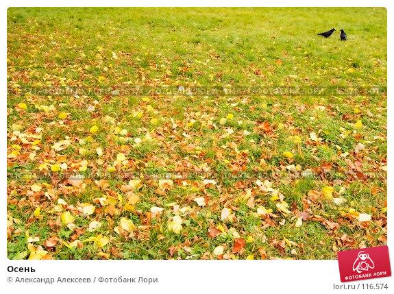 Осень, эксклюзивное фото № 116574, снято 30 октября 2007 г. (c) Александр Алексеев / Фотобанк Лори