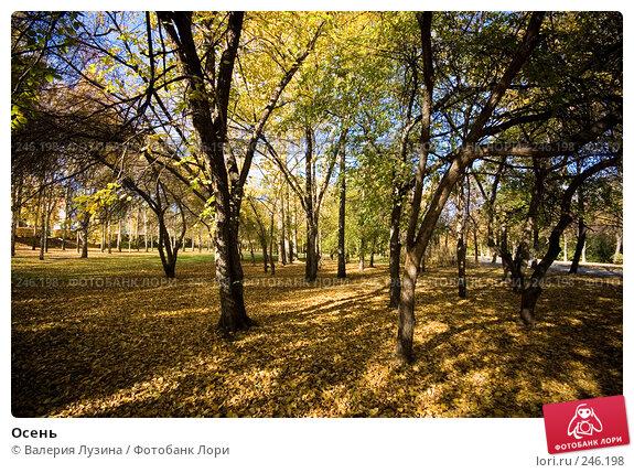 Осень, фото № 246198, снято 2 октября 2007 г. (c) Валерия Потапова / Фотобанк Лори