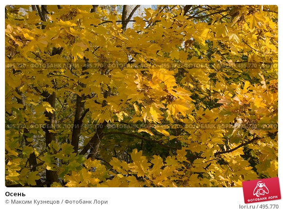 Купить «Осень», фото № 495770, снято 4 октября 2008 г. (c) Максим Кузнецов / Фотобанк Лори