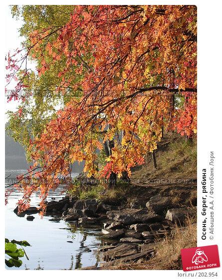 Осень, берег, рябина, фото № 202954, снято 17 сентября 2005 г. (c) Абышев А.А. / Фотобанк Лори