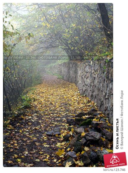 Осень и листья, фото № 23746, снято 27 октября 2006 г. (c) Валерий Шанин / Фотобанк Лори